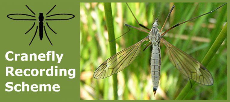 Cranefly_Recording_Scheme_photo768x340.jpg